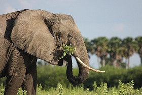 Elephant Photo Gallery